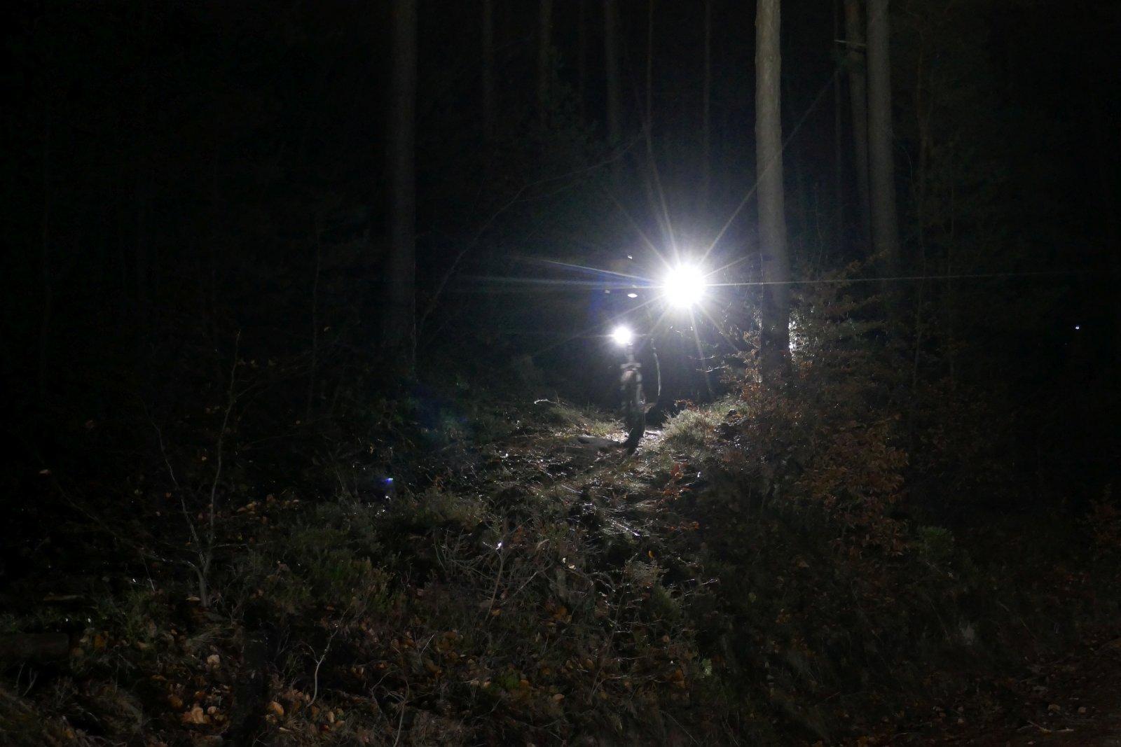 Aus dem Wald.jpg