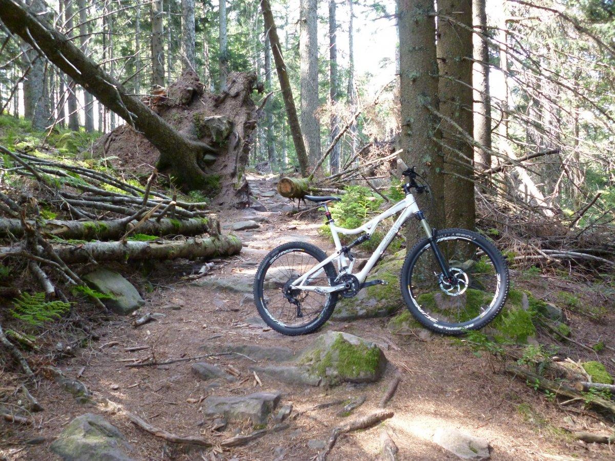 Badner Höhe Trail.JPG