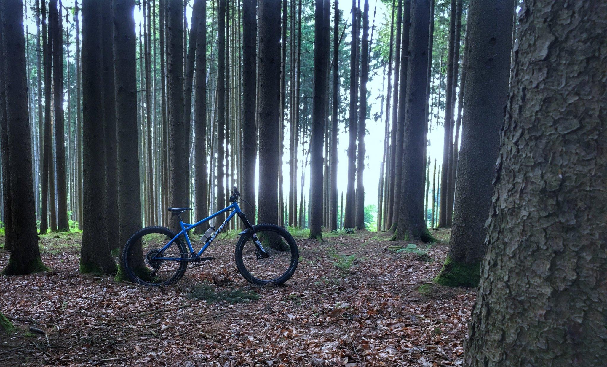 BFE-Wald.jpg