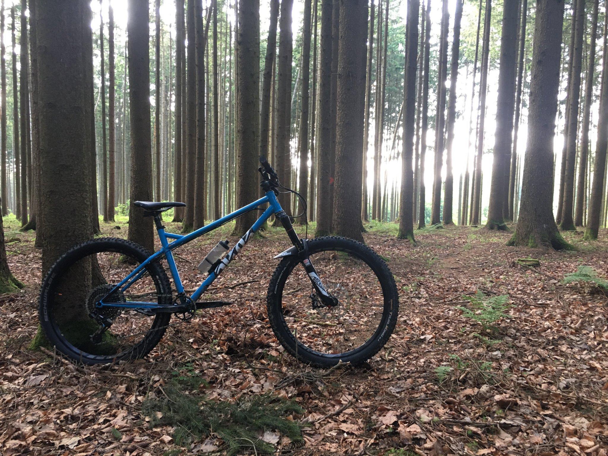 BFE-Wald2.jpg
