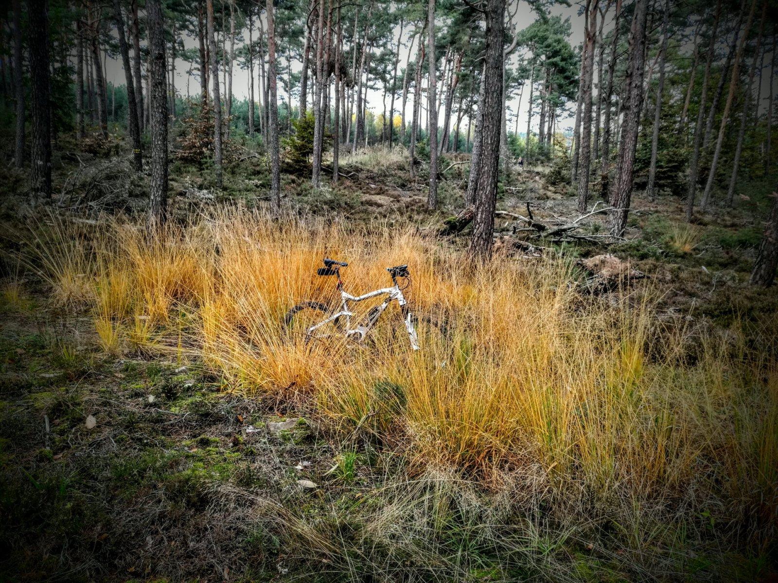bike (34).jpg