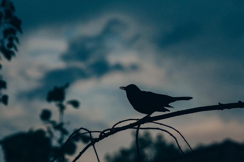 Late Bird.jpg