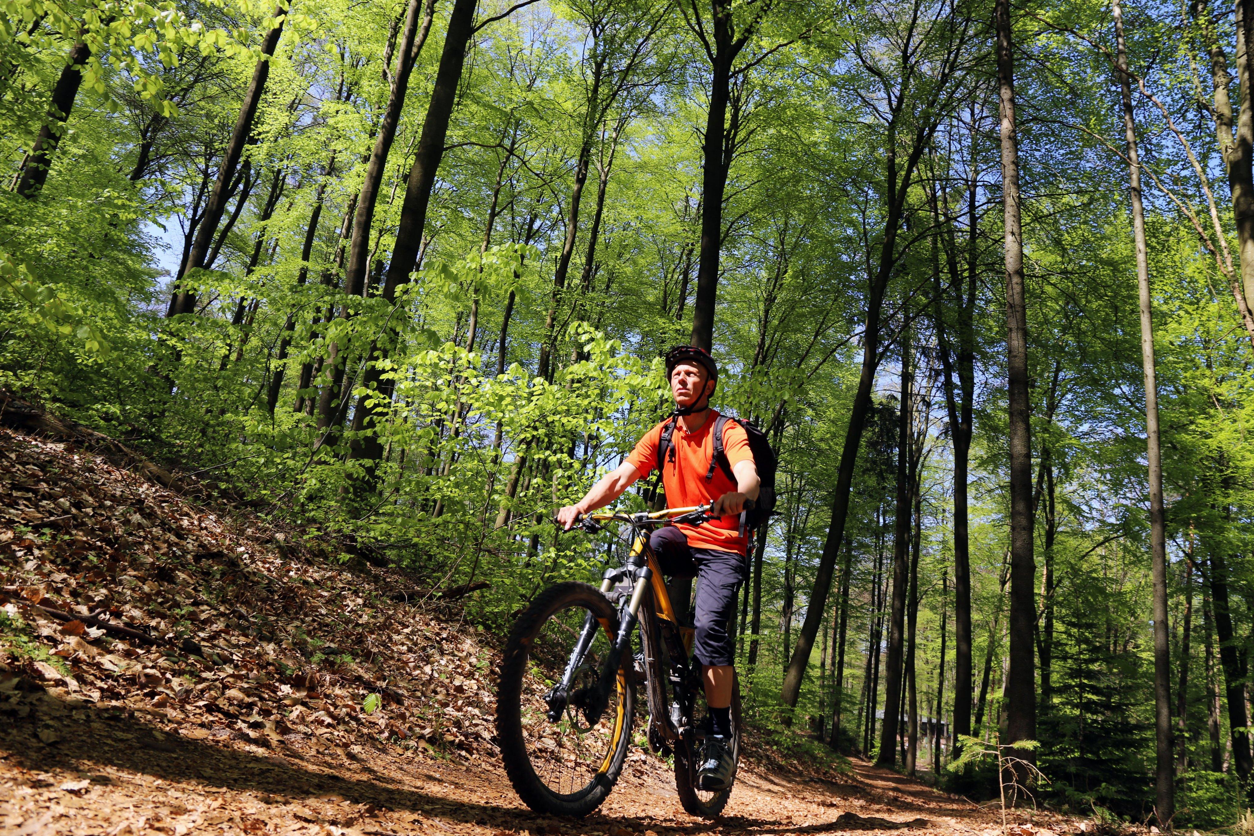 Mountainbiker Wald 01.JPG
