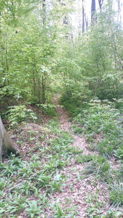 Old Trail (1).jpg