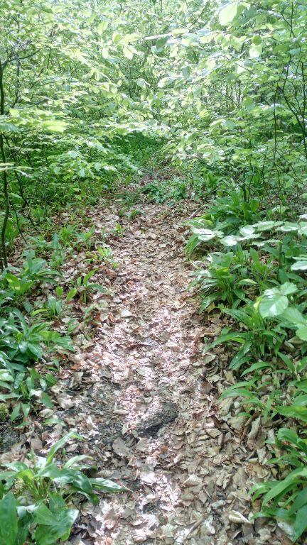 Old Trail (2).jpg