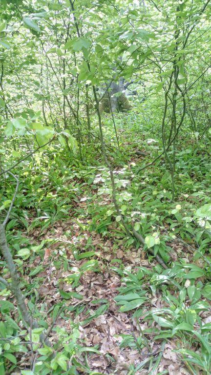 Old Trail (3).jpg