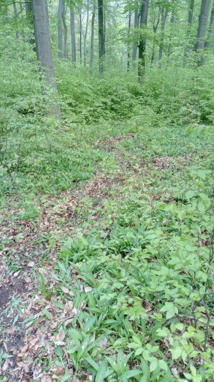 Old Trail (4).jpg