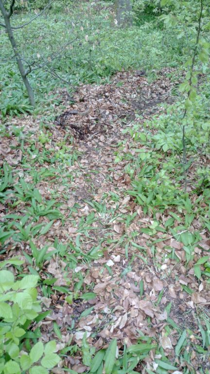 Old Trail (5).jpg