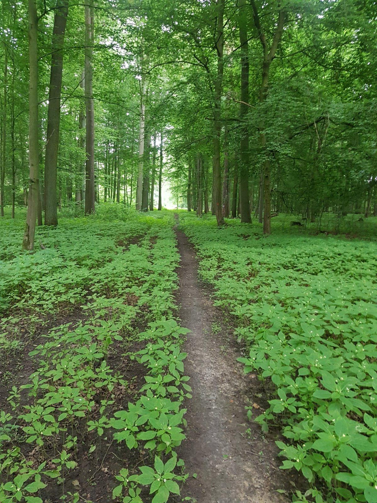 schöner Trail kleiner Holz.jpg