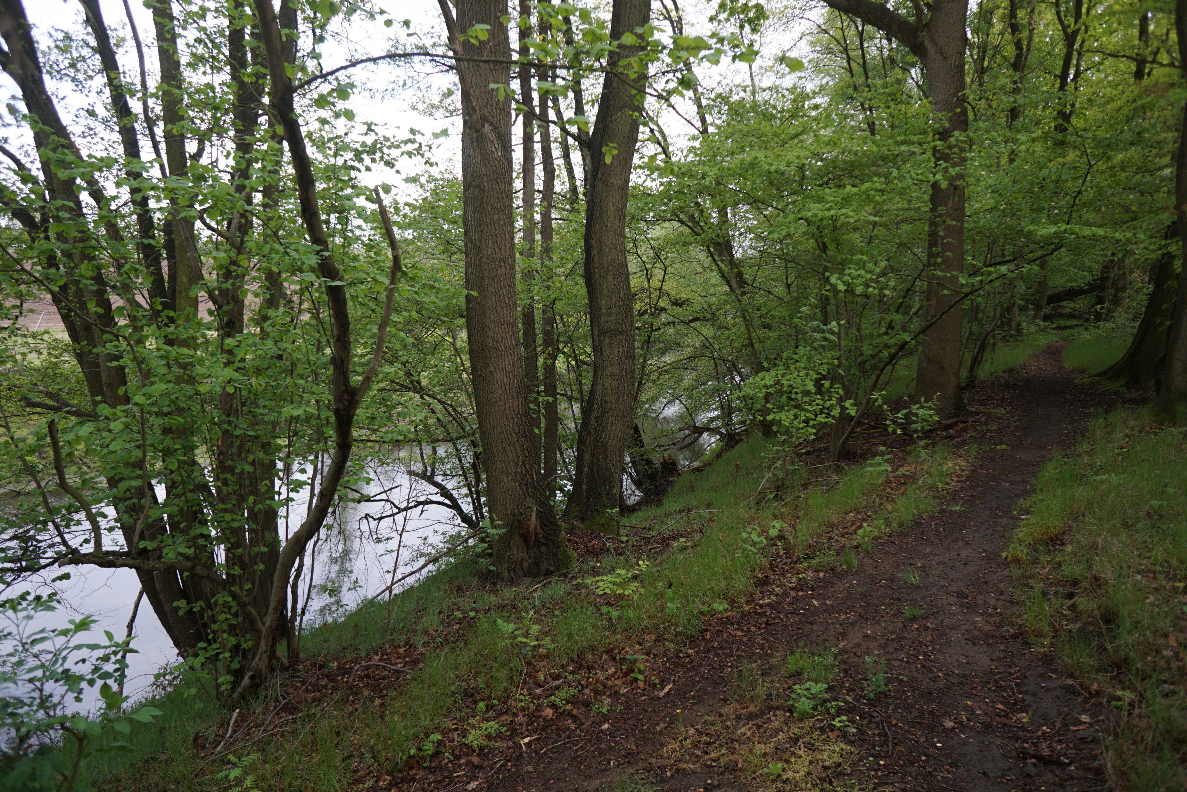 Trail bei Dalldorf.JPG