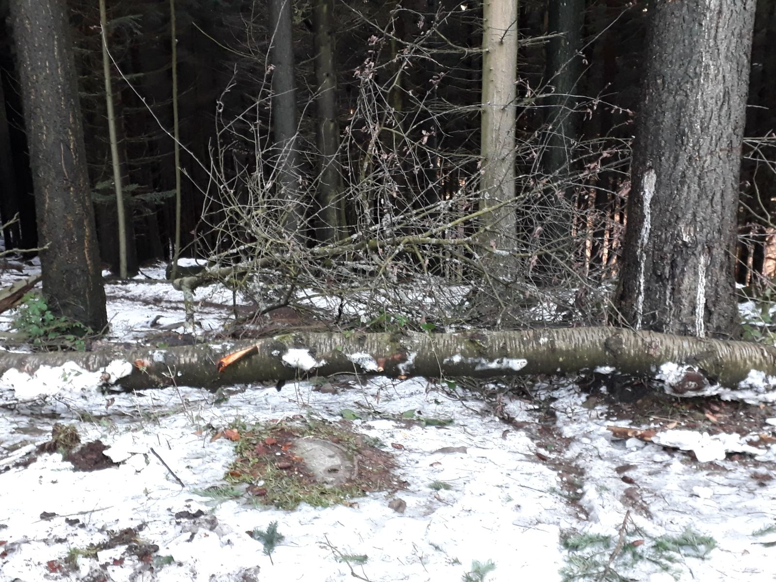 Wurzeltrail mit Baum.