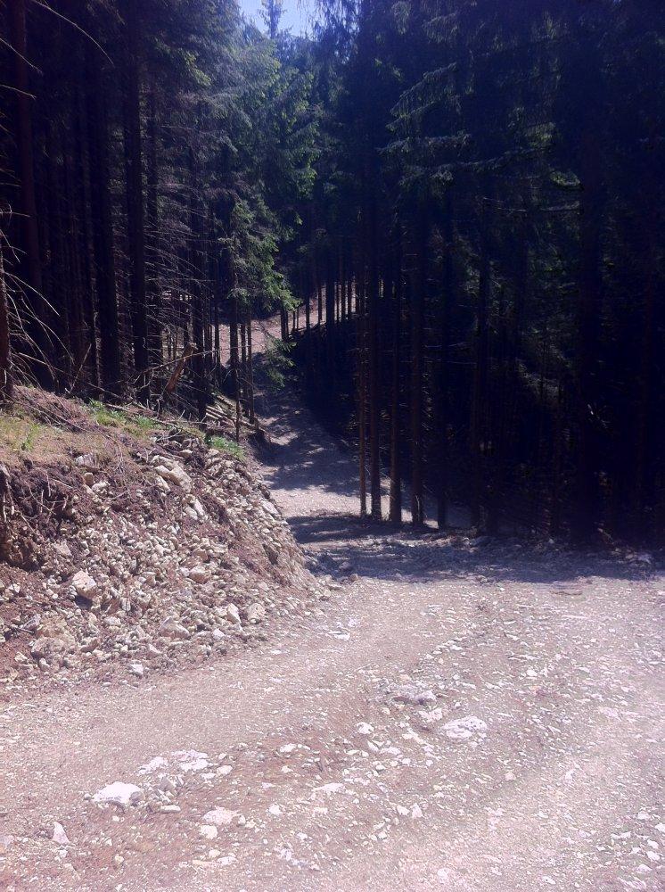 Zerstörter Wald Hochgern.JPG