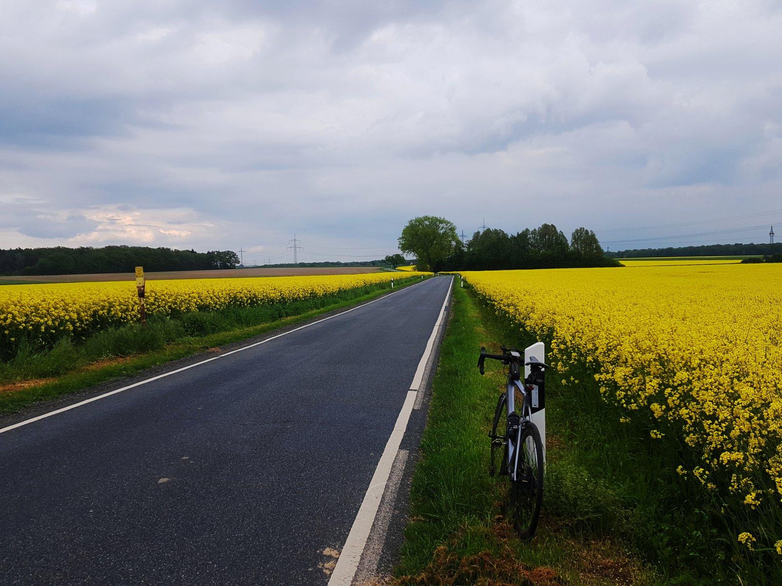 Zwischen Jelpke und Brunsrode durchs Gelb.jpg