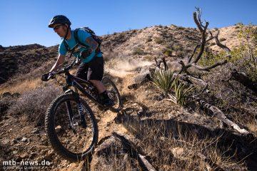 Palm_Canyon_Trail-60